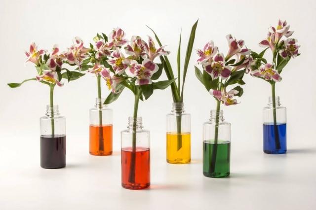 Com potes de plástico e anilina, as cores das astromélias ganham ainda mais destaque