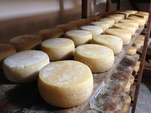 O novo queijo do Serro é mais maturado, mas mantém a acidez característica dos queijos da região.