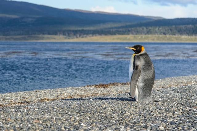 Entre os encontros da viagem, o pinguim imperial