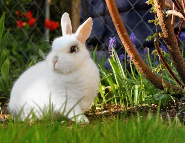 Testes são feitos em animais como camundongos, coelhos e cachorros