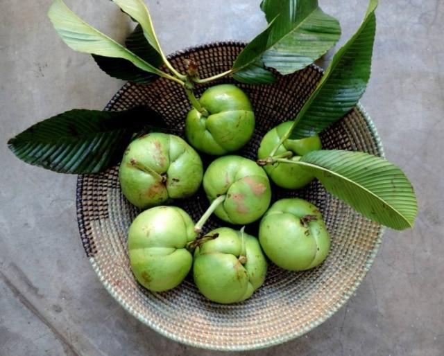 O fruto maduro tem cheiro forte e é pesado, mas os verdes, que devemos comer, têm perfume ácido e refrescante, quase como maçãs.