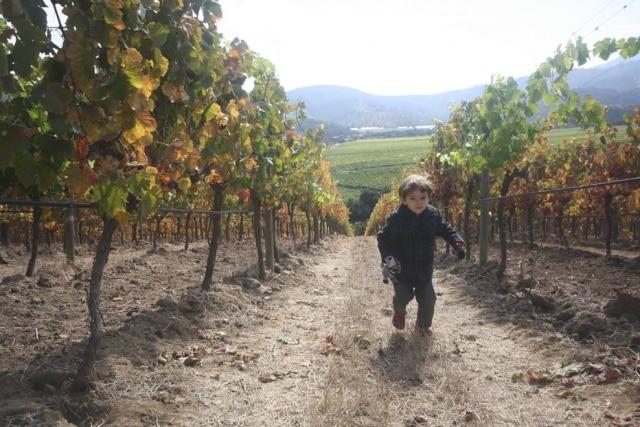 Chico, 3 anos, se diverte nos vinhedos da vinícola Matetic.