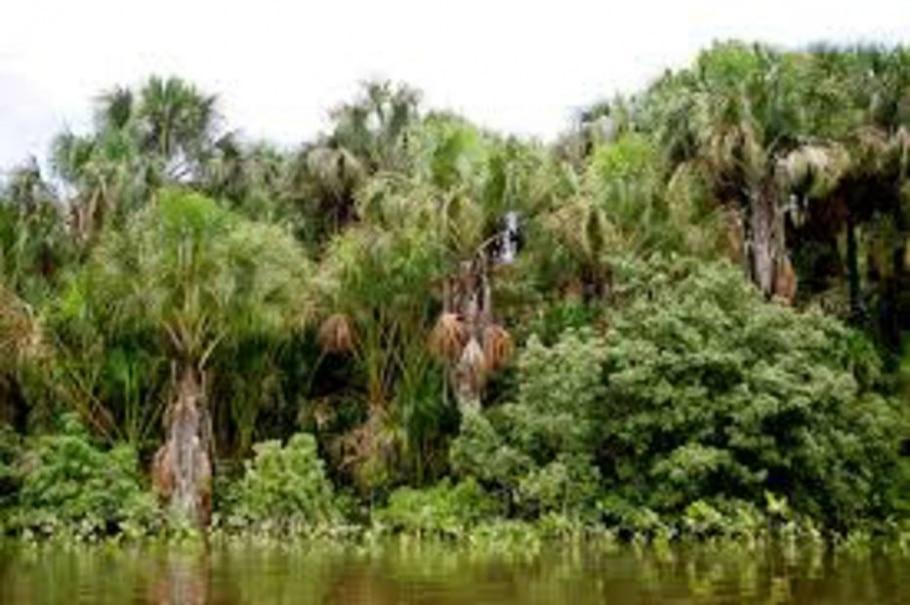 Amazônia perde capacidade de absorver carbono, diz estudo - José Patrício/Estadão