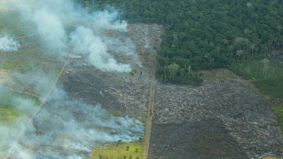 Brasil avança na conservação da Amazônia, diz relatório norueguês - Divulgação