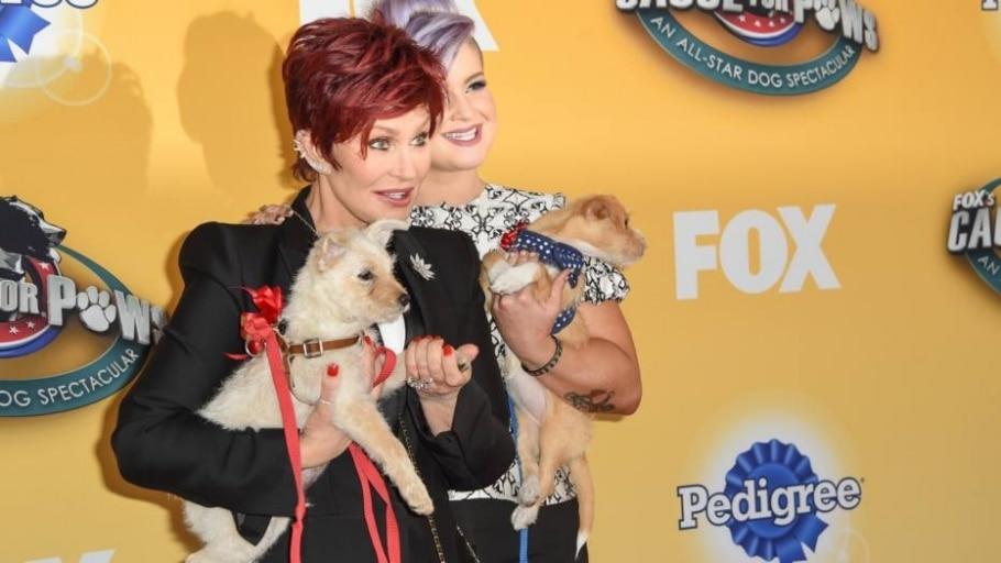 Feira de adoção de animais reúne celebridades nos EUA - Rob Latour/AP