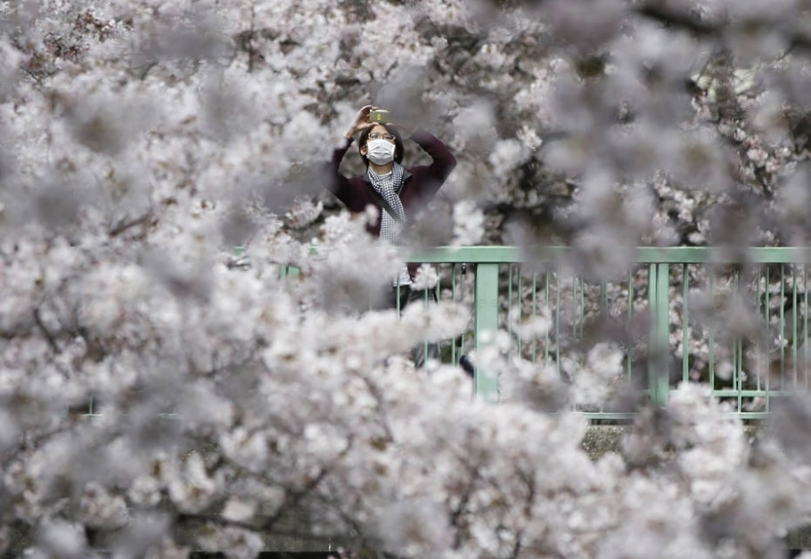 Japão se colore de rosa na época da Sakura - REUTERS/Issei Kato