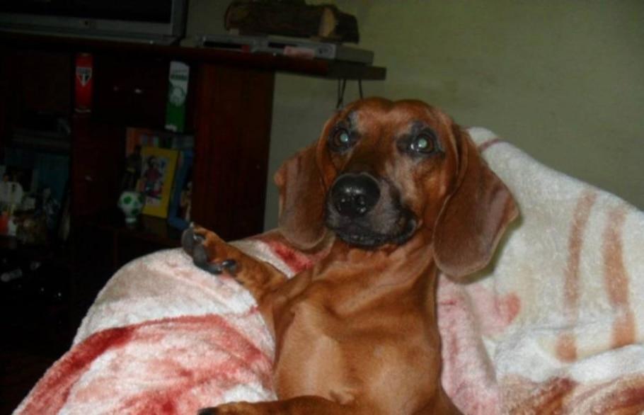 Prefeitura de Araraquara é condenada por sacrificar cachorro - Divulgação