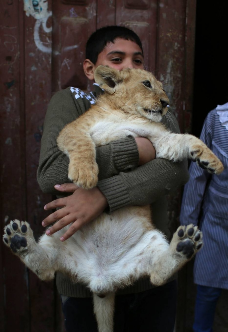 Família palestina e seus dois leões bebês - Said Kathib/AFP