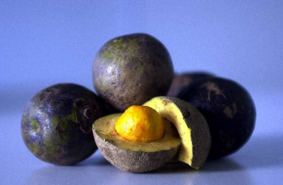 O pequi, fruta nativa do cerrado. - Betao Barata/AE