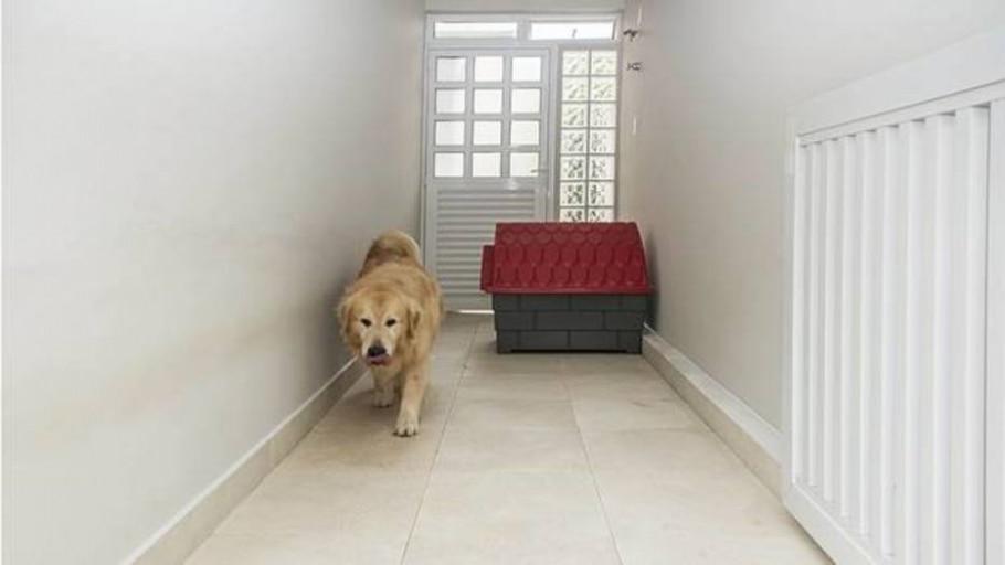 Apresente os novos espaços do seu cachorro - Estadão