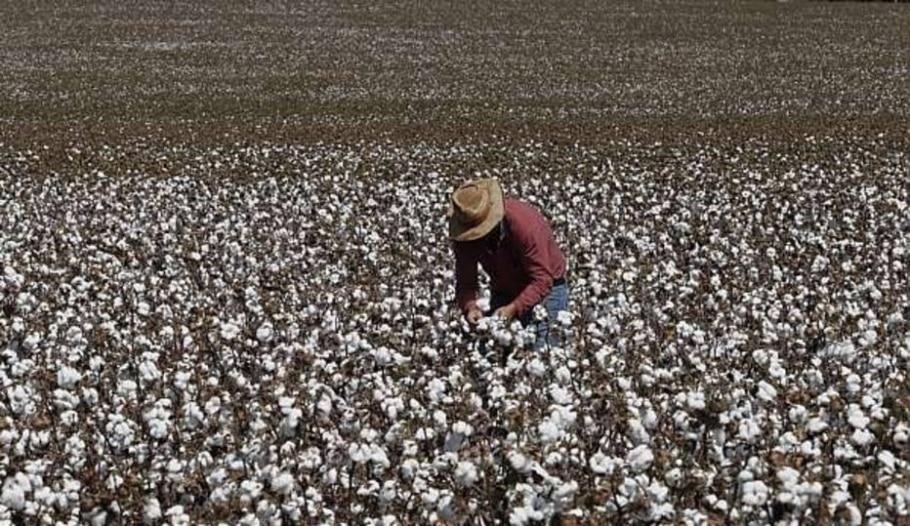 Brasil deve propor ao G-20 compromisso de congelamento de subsídios agrícolas - Epitacio Pessoa/Estadão