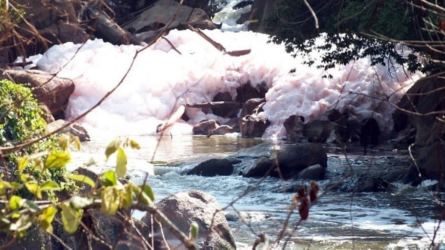 Fruto de cacto causou espuma cor de rosa no Rio Jundiaí - Nelson lisboa/Jornal Tapera