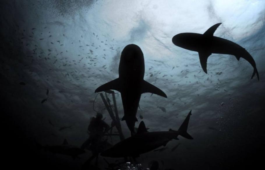 Está pronto para virar comida de tubarão? - Jonne Roriz/AE