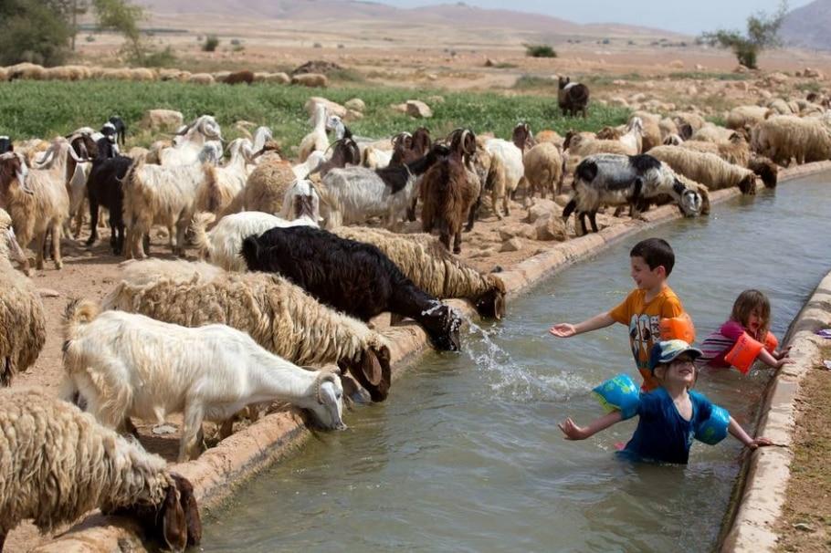 Israelenses comemoram o 'Pessach'  - AFP PHOTO/MENAHEM KAHANA