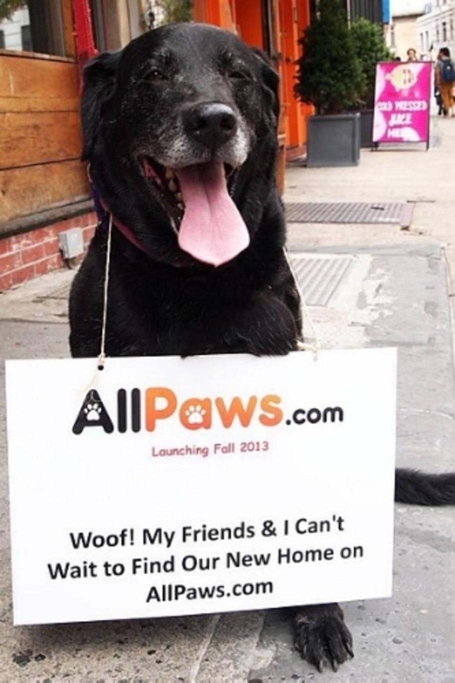 Norte-americano cria site para cadastro de pets abandonados - Divulgação