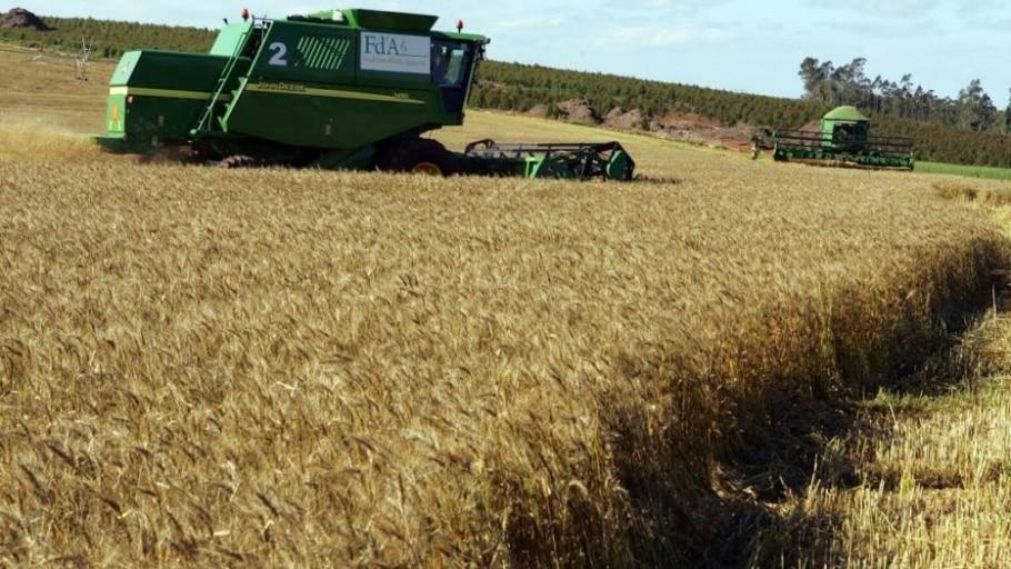 Chuvas devem aliviar seca em lavouras de trigo do norte da Argentina - Antonio Milena/Estadão