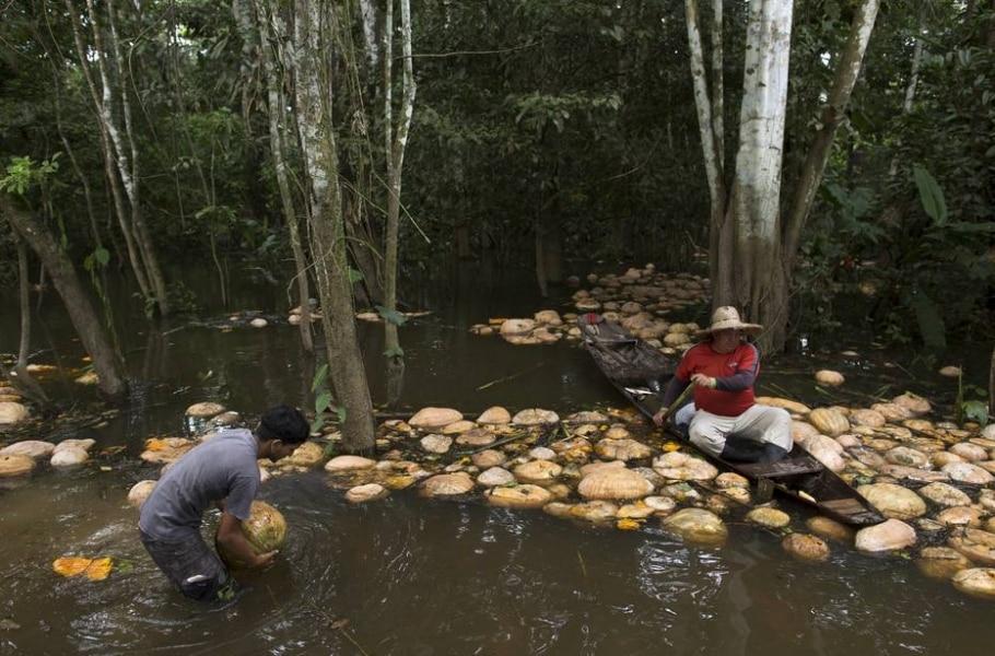 Cheia do Rio Solimões - REUTERS/Bruno Kelly