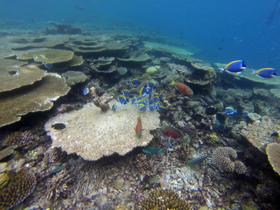 Ilhas Maldivas - Cecília Cussioli/Estadão