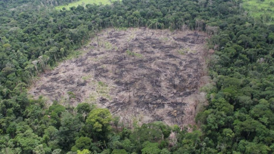 Meta mundial de biodiversidade está ameaçada - Lourival Sant
