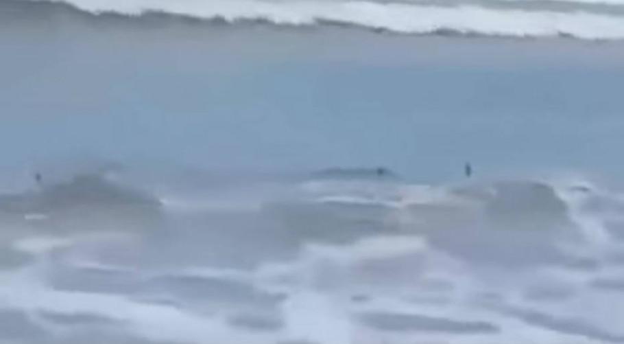 Tubarões são vistos na Praia Martim de Sá, em Caraguá, SP - Reprodução