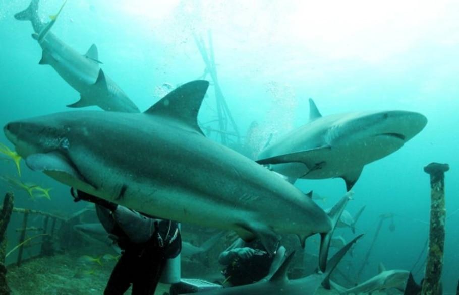 Beleza e tensão em um almoço com os tubarões - Jonne Roriz/AE
