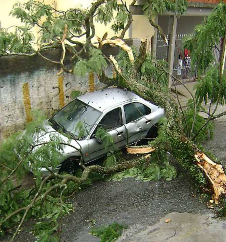 Árvore caída após chuva na  rua Francesco Albani,  Butantã, zona oeste da cidade. 23-01-2010 - Thaís Pinheiro /FotoRepórter/AE