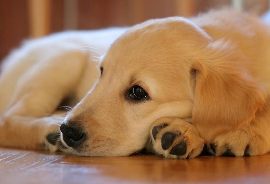 Deixe seu cachorro sozinho às vezes - Pixabay