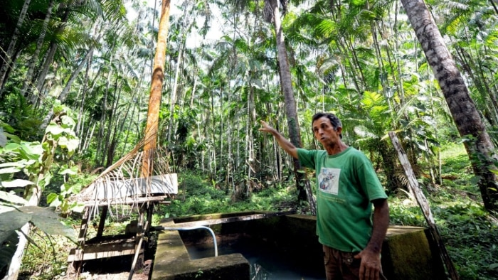 Açaí vira alternativa a desmatamento na Amazônia - Economia - Estadão