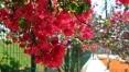 Primavera traz chuva e não terá frio atípico
