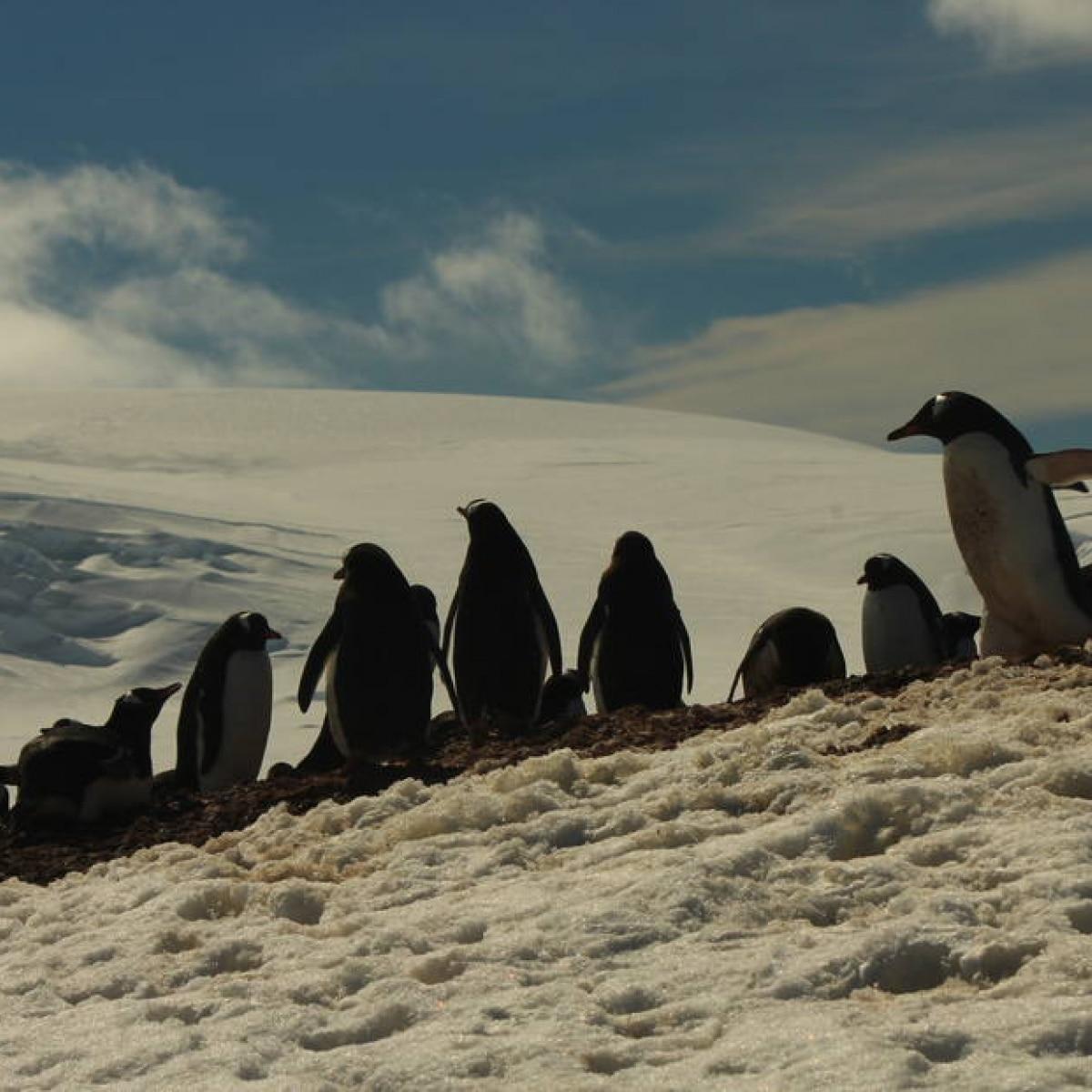 e3cbdeda1f Embarcamos num cruzeiro turístico rumo à Antártida - Viagem - Estadão