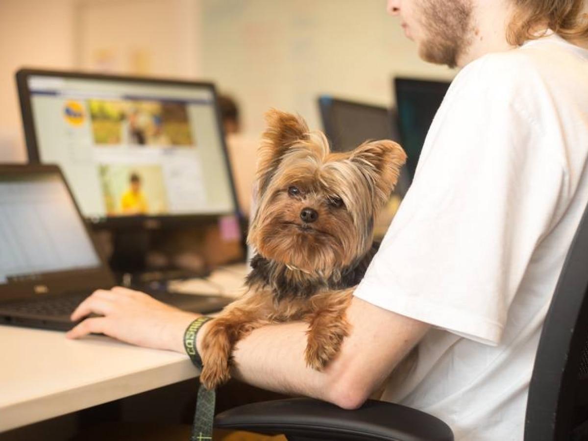 Adoção de pet leva profissional a ganhar licença como benefício de empresa