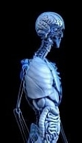Entenda a importância do bom funcionamento do intestino
