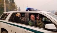 Animais resgatados na Califórnia