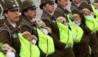Filhotes de cães participam de desfile militar do Chile