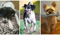 O que revelam algumas expressões faciais dos cães?