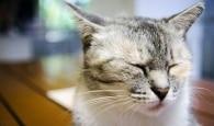 Por que os gatos merecem um dia só pra eles?
