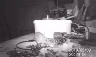 Reprodução de 'House-proud mouse caught on camera tidying garden shed | SWNS TV'/YouTube