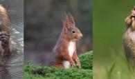 As fotos mais engraçadas de animais selvagens de 2020