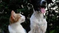 Consolação recebe feira de adoção de cães e gatos