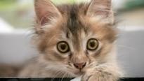 10 mitos da caixa de areia de gato