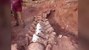 Dinossauro encontrado na Argentina pode ser o...
