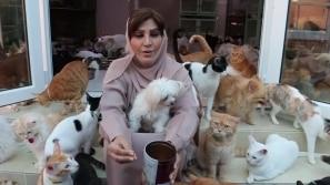 A mulher dos 500 gatos