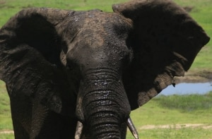 O ecossistema múltiplo de Botsuana