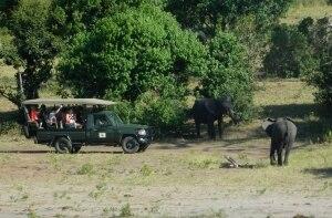 Cerca de 90 elefantes mortos por caça são encontrados em Botsuana