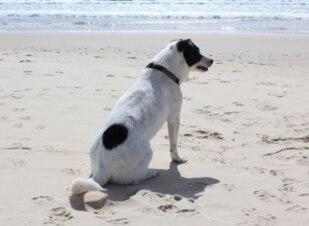 Pets também precisam de protetor solar