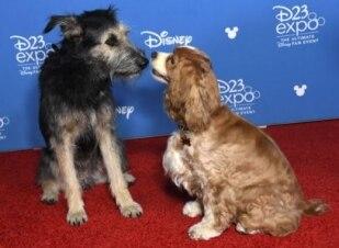 Veja os atores caninos no tapete vermelho