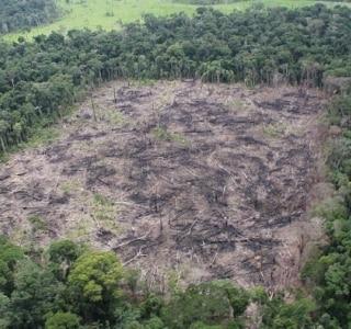 Desmatamento avança 467% na Amazônia