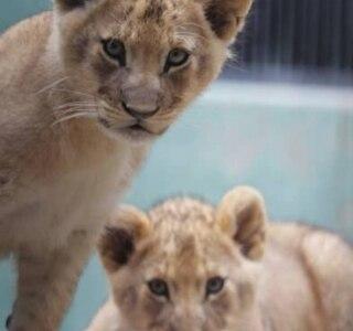 Fundação Parque Zoológico de São Paulo