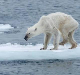 Kerstin Langenberger/arctic-dreams.com