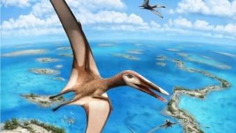 A nova espécie recebeu o nome de Mimodactylus libanensis Foto: Julius T. Csotonyi